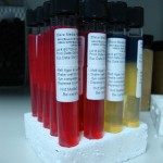 Brucella Dye Tolerance Media with Basic Fuchsin